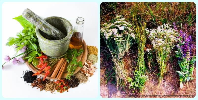 Трави від герпесу » журнал здоров'я iHealth 2