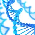 ДНК цитомегаловируса
